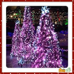 """Foto: Lite nordamerikanskt julglitter från """"Festival of Lights"""" i Van Dusen Gardens."""