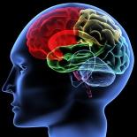 Foto: Illustration av hjärnan från Shutterstock.com.